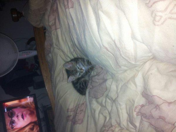Voilà notre nouveau chat