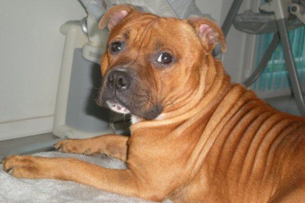 First Tyson à bientôt 2 ans