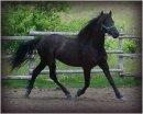 Photo de chevalcheval0000