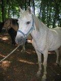 Photo de x-chevaux-samantha-x