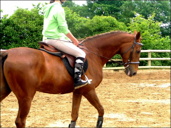 Qui l'aurait cru, il y a rien 3ans de ça... que j'aurai entre mes mains le plus bel être de la terre, ma moitié, mon autre côté, celui dont tout cavalier à besoin, celui qui peut combler une vie, celui que je ne pourrai jamais oublier, qui restera le premier, le plus beau & le plus fort, quoi que les gens en disent ou bien en pensent, le cheval d'une vie, de ma vie. Champion ♥