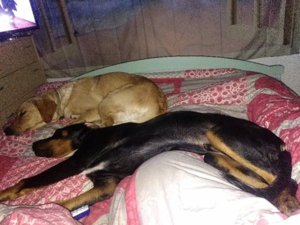 Mes deux amours de chiens