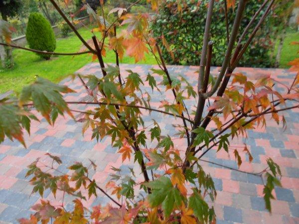 L'automne au jardin ...