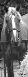 ♡ Si on te dis que ce n'était qu'un cheval, contente toi de sourire, ils ne peuvent pas comprendre...
