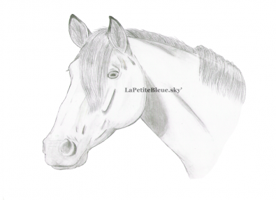 Paint Horse sans tache - Mai 2008