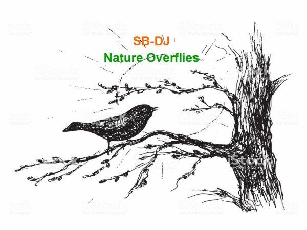 """SB-DJ Remix : Découvrez ce Nouveau Mashup-Remix """"Nature Overflies"""""""