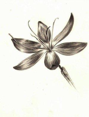 (487) - Cosmic Flower