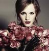 Rose In Love