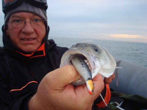 Castaic sardine !!!!!!!!!!!!!!!!