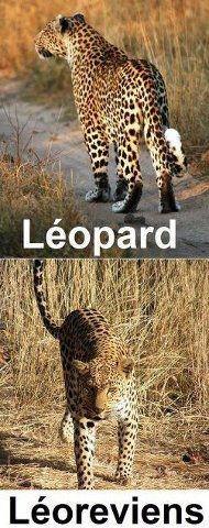 léopard et revient lol :)