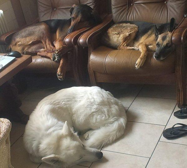 les chiens de ma mère et mon bop