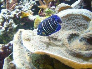 La visite de l'aquarium de Porte Dorée