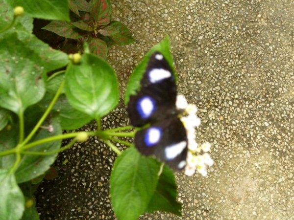 L'Ile Aux Papillons (Noirmoutier)