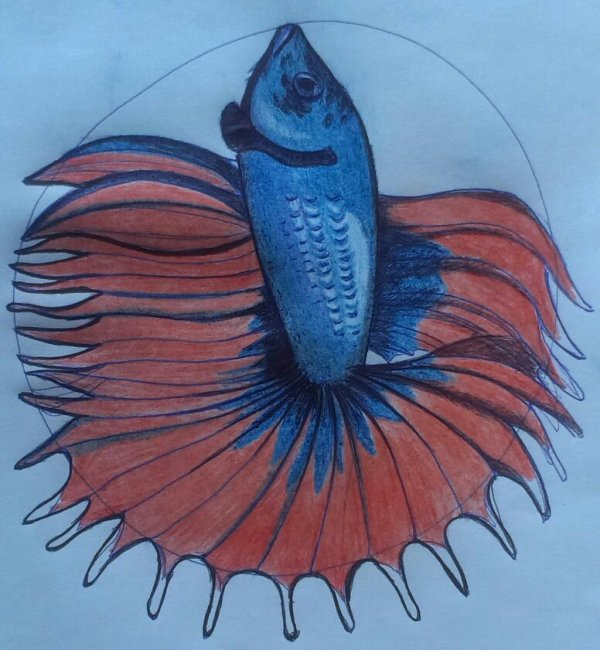 Joyeux poisson d'avril!