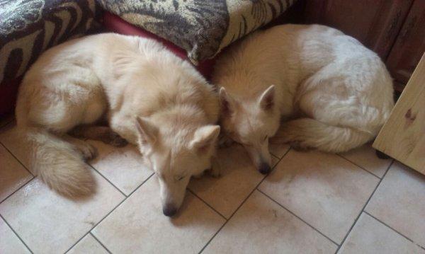 Les chiens de ma mère et de mon bop