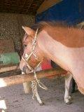 Photo de le-monde-cheval