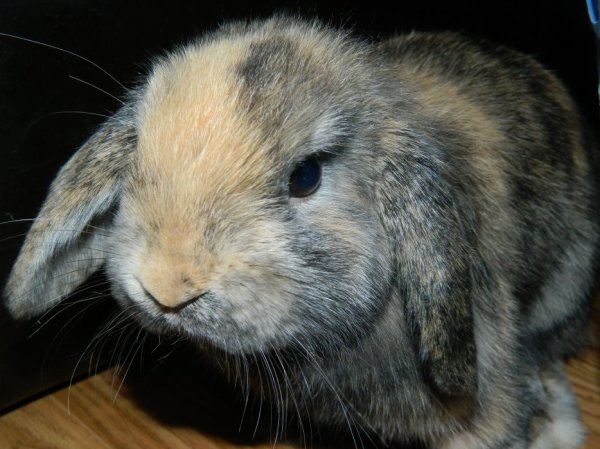 Concours n°2 (lapin)