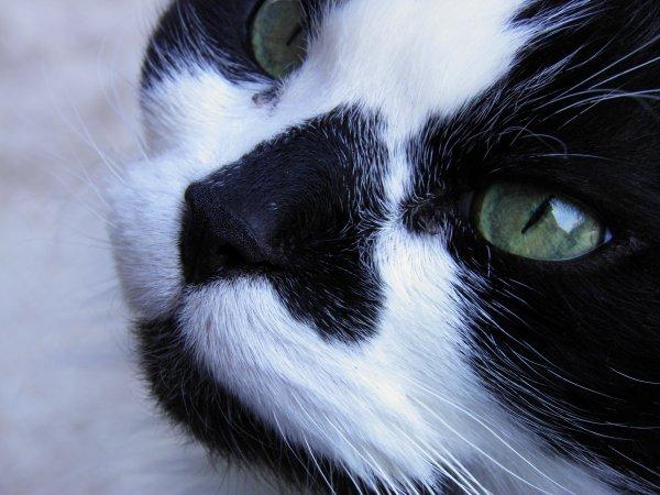 Tout le monde veut devenir un Cat ♫