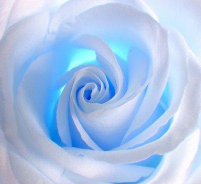 une rose bleue symbole de l 39 amiti mes tats d 39 mes. Black Bedroom Furniture Sets. Home Design Ideas