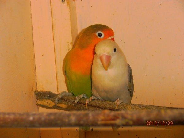 mon couple d inseparable