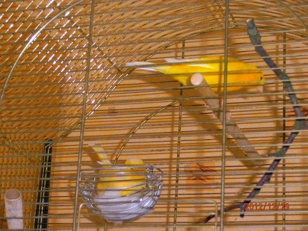 eh oui javais bien resond mon couple prepare leur nid