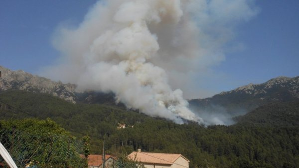 INCENDIES EN CORSE DU SUD UNE CATASTROPHE ECOLOGIQUE