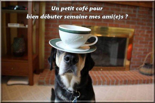 BON LUNDI ET BONNE SEMAINE VOICI UN BON CAFE CORSE BIEN CORSé
