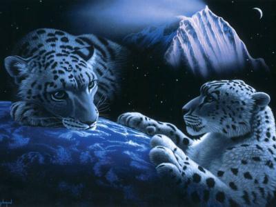 Fond écran Encore Des Tigres Blanc Poême Des Fond D