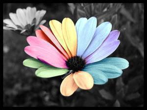 Une Fleur Unique Comme Toi Images Une Envie De
