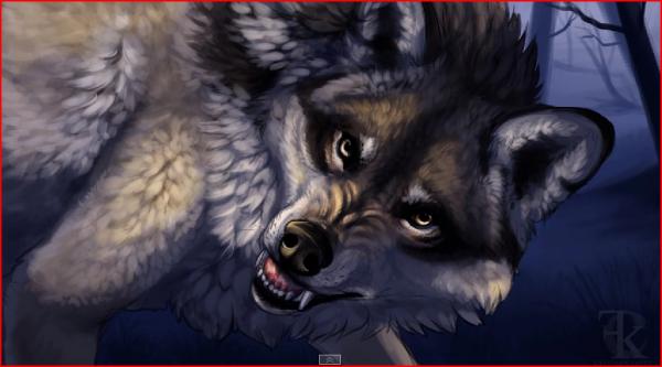 ma louve commende esprit de loup