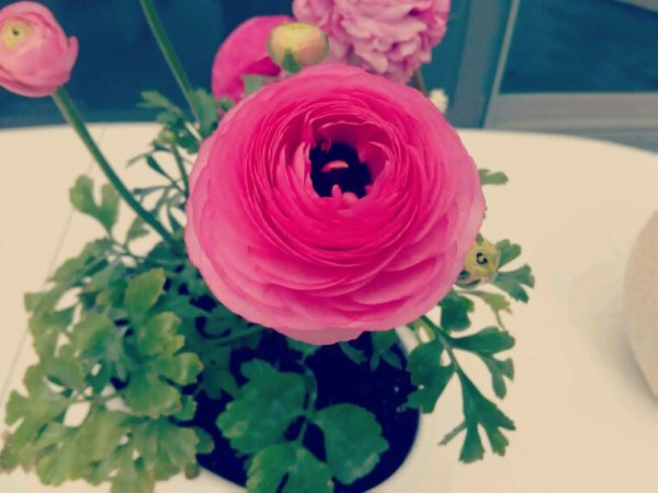Pink Flower ?