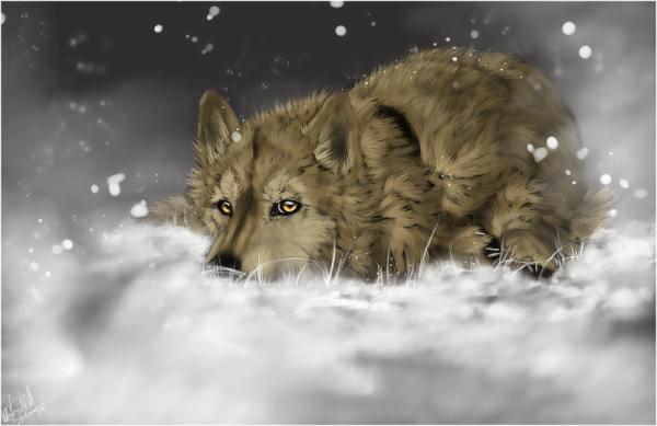 Saru: Le loup mal aimer!
