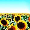 Hard Sun ~ Eddie Vedder