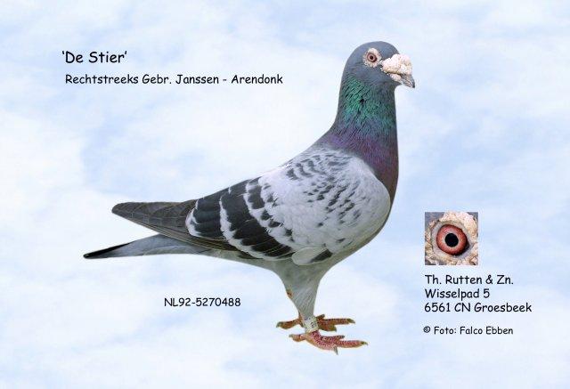 Blog de pigeons-youssoufia