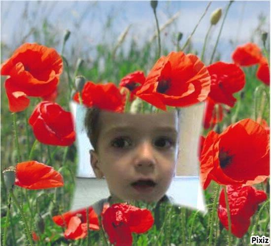 Petits montages de Nouets'fleurs pour toi Kenzo