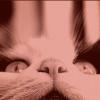 Rubrique : ton blog référence te présente son bilan blog en cher et en os →