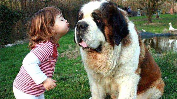 Le chien est le meilleur ami de l'Etre humain