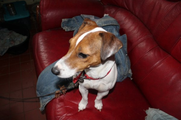 mon petit chien pepito