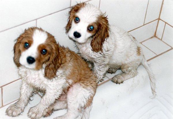 La première douche...   Die erste Dusche...
