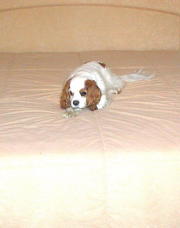 N'en dites pas un mot …. j'ai trouvé une place sur le lit familial.... Sag kein Wort .... Ich fand einen Platz auf dem Familienbett ....