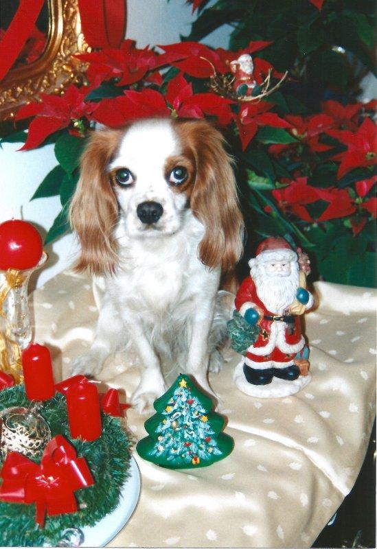JOYEUX NOEL... FROHE WEIHNACHTEN... MERRY CHRISTMAS...