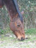 Photo de love-chevaux91