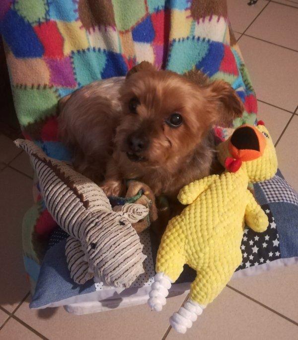 Mon petit chien Cooky