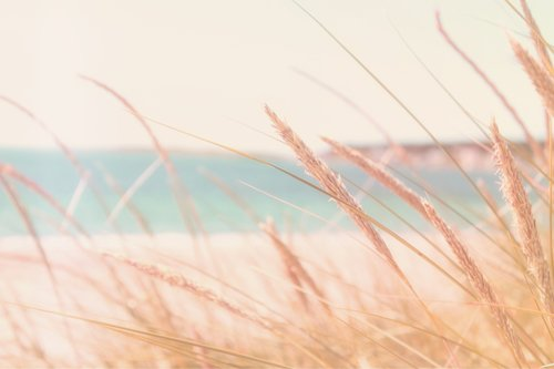 Bleach   1S - Lorsque le vent se lève