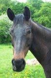 Photo de Equitation-MaPassion