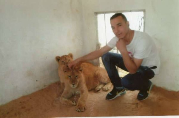 me ad lions