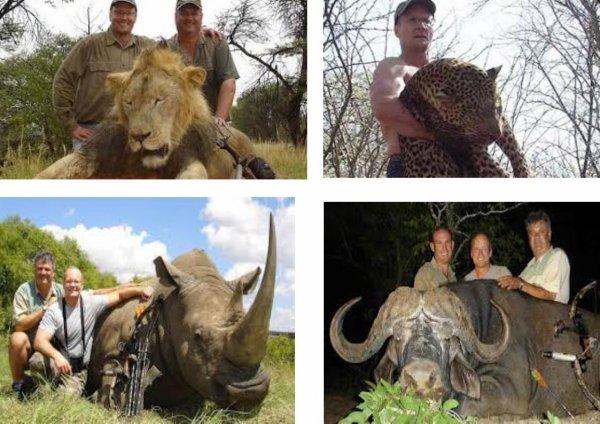 Cecil, un lion abattu par un dentiste !