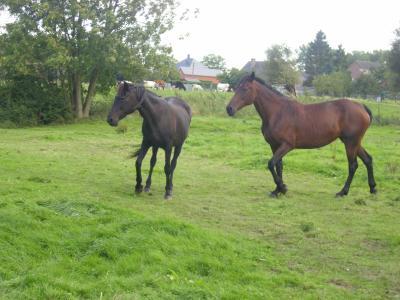 Ysraline et Tara