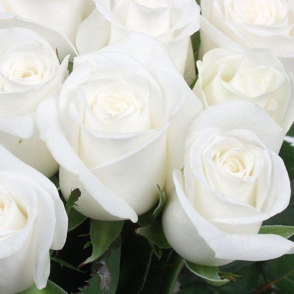 rose blanche sur bloc pour gregory