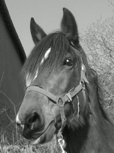 « Etre heureux à cheval, c'est être entre ciel et terre, à une hauteur qui n'existe pas. »
